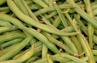 phaseolus vulgaris linnaeus nitty grits